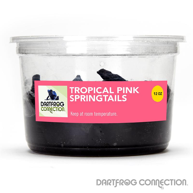 Tropical Pink Springtails 12 oz