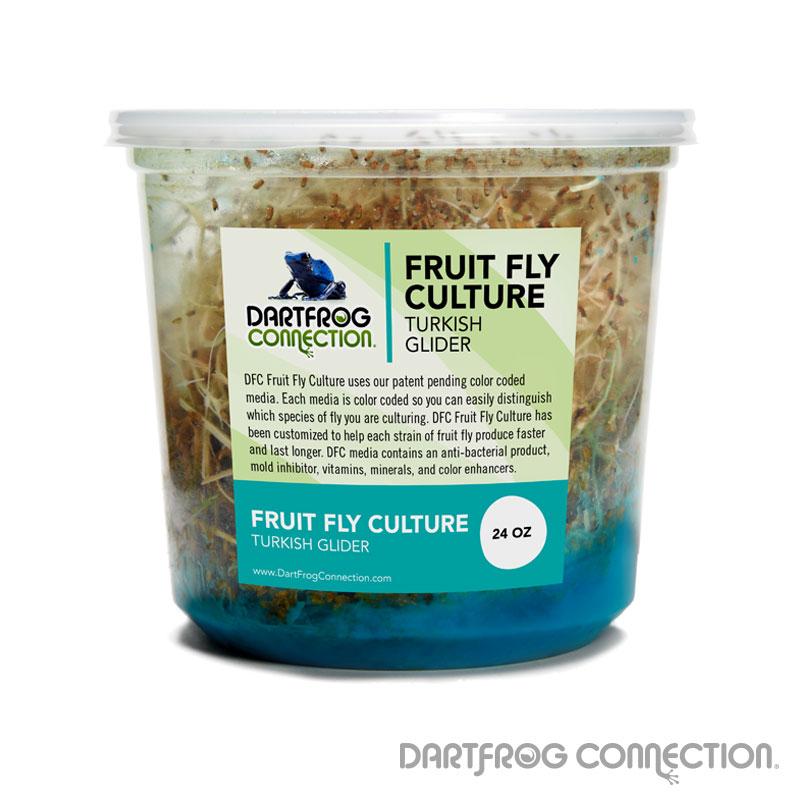 DFC Turkish Glider Fruit Fly Culture (24oz)