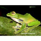 15_flying frog