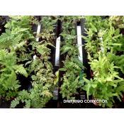 DFC FACILITY: PLANTS, PLANTS, PLANTS
